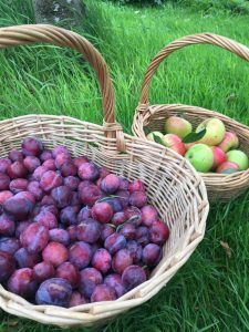 Orchard Produce